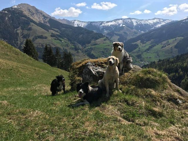 Hotel Grimming dogs & friends in Rauris im Sommer